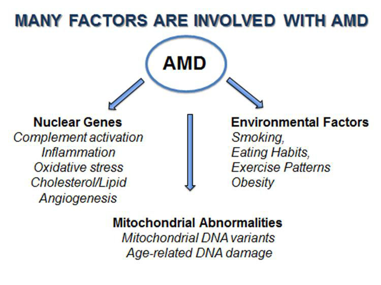 Mitochondria and Age-Related Macular Degeneration