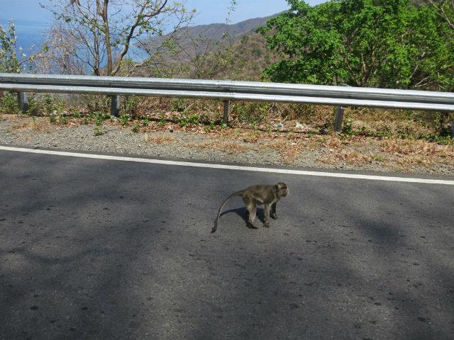 travel indonesia road trip monkeys