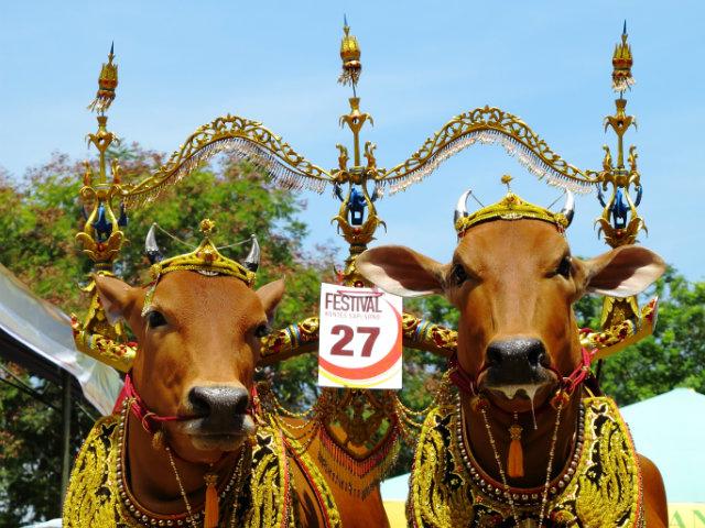 Sapi Sono Festival