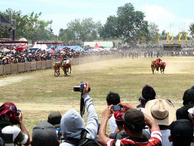 bull racing madura