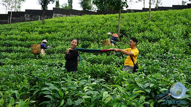 Bollywood scene in tea plantation