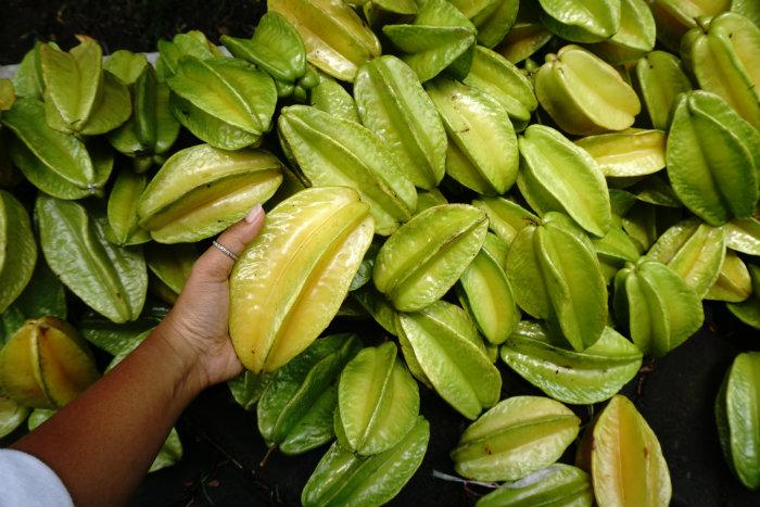 Star Fruit, Agrotourism Blitar