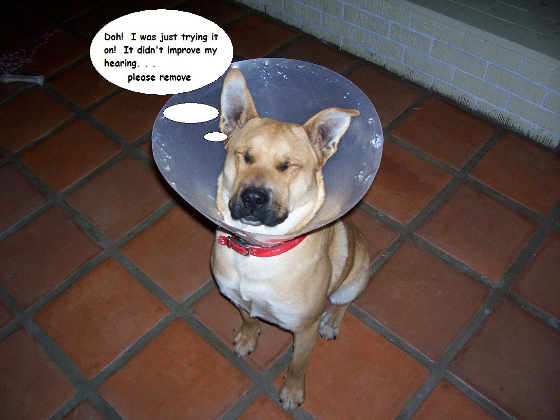 Cool Related Posts Diva Dog Training Blog Dog Wears Cone Shame Diva Dog Cone Shame Decorations Shame Alternative Cone bark post Cone Of Shame