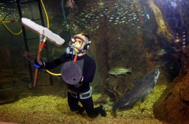 Aquarium Diver?s most important tasks is to keep the aquarium/tank