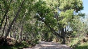 alamito-creek-featured