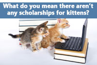 kittens trying to find the best scholarships