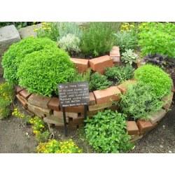 Small Crop Of Vertical Herb Garden Plans