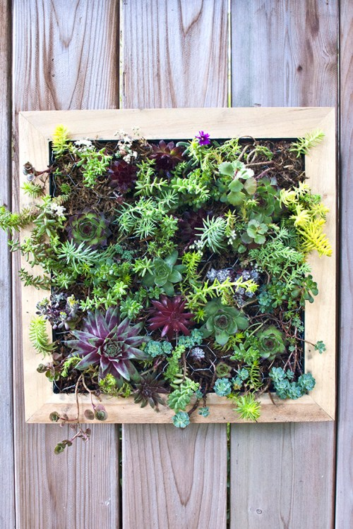 DIY Vertical Succulent Garden Tutorial