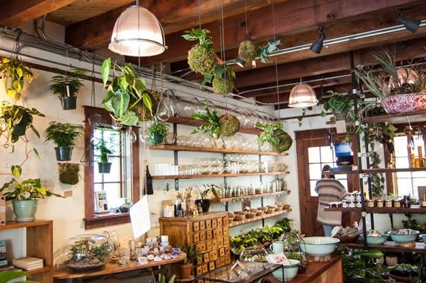 Portland plant shop Pistils Nursery