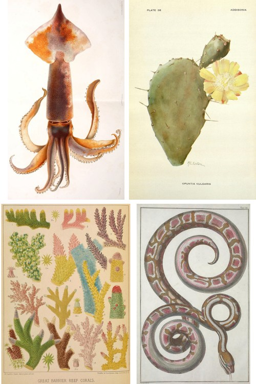 Free Art Resources: Biodiversity Heritage Library