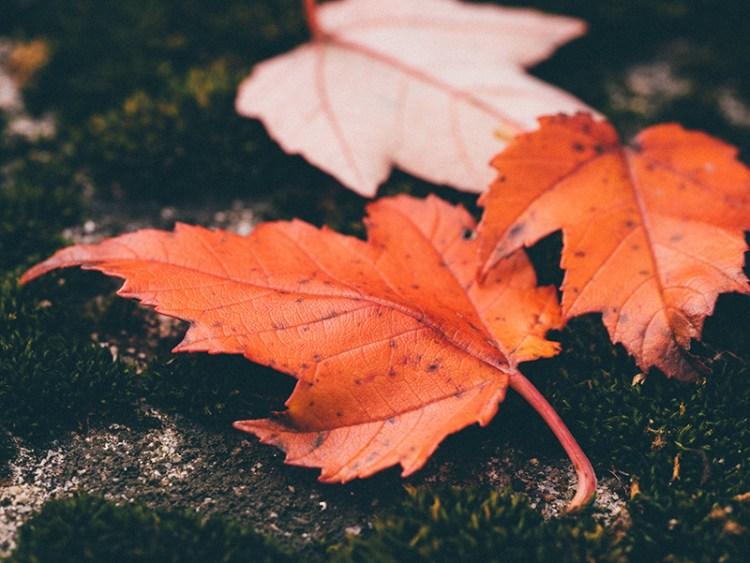 Moss + leaves