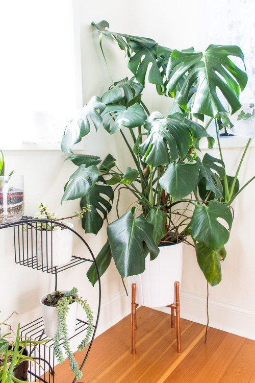 Lessons I've learned the hard way about how to keep houseplants healthy