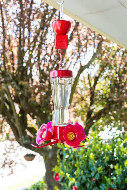 Are ants eating your hummingbird food? Make this easy hummingbird feeder ant moat to keep ants away!