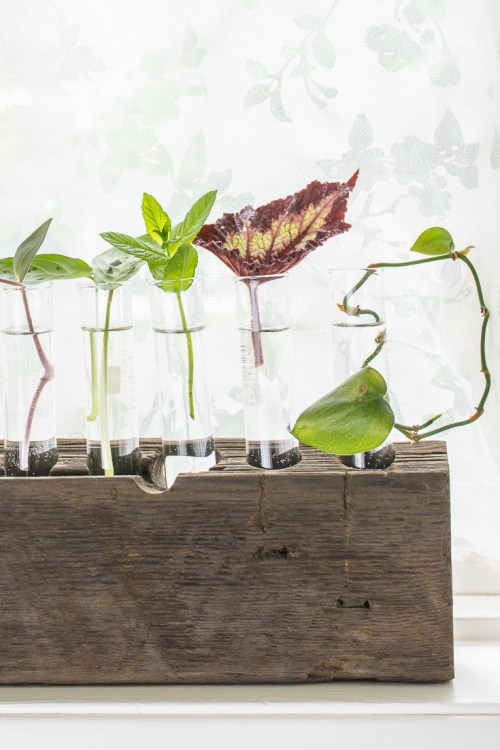 Make a DIY test tube vase plant propagation station.