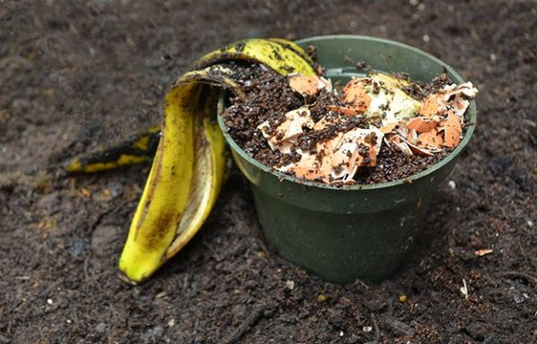 How to Compost Table Scraps