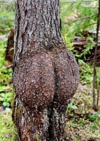 strom připomínající zadek