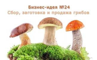 Бизнес-идея №24: «Грибы. Заготовка грибов: белые, маслята, опята, лисички и другие»