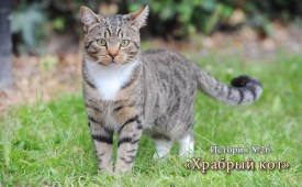 История №26: «Храбрый кот»
