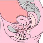 female ejaculation