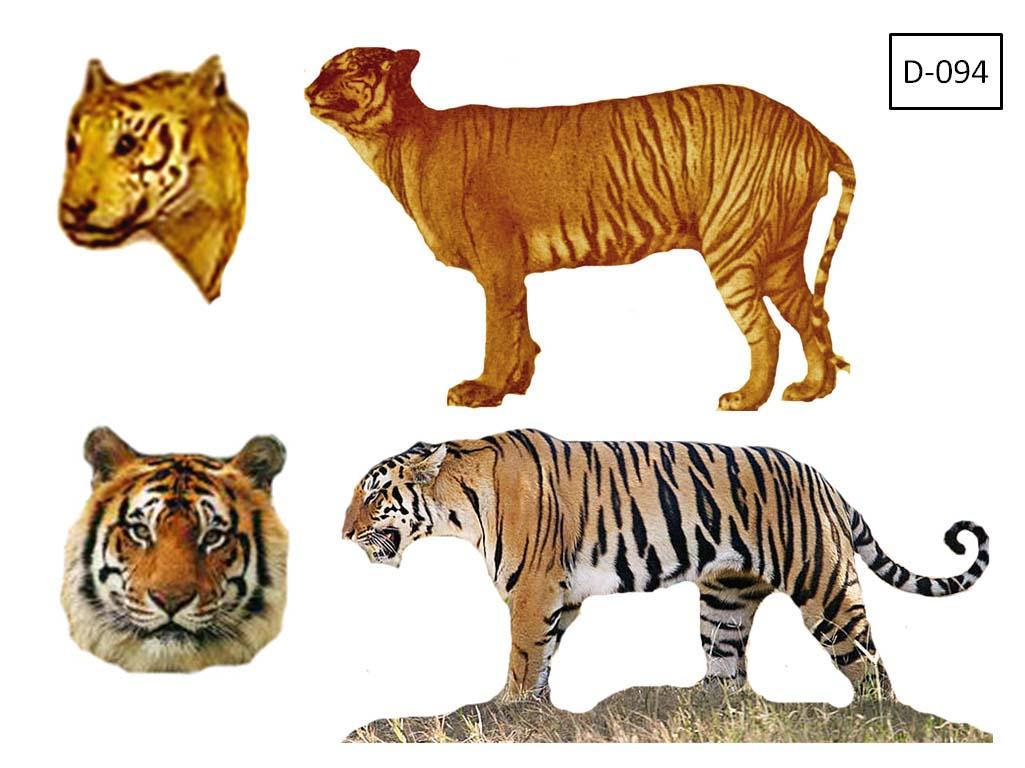 harimau jawa ditemukan