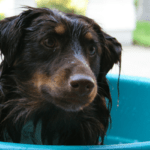 Does Your Dog Go Crazy After A Bath?