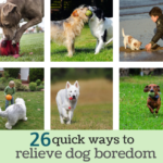 Simple Ways To Relieve Dog Boredom – 26 Tips