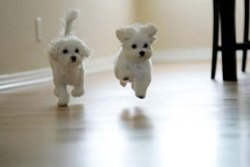 two-cute-happy-puppies