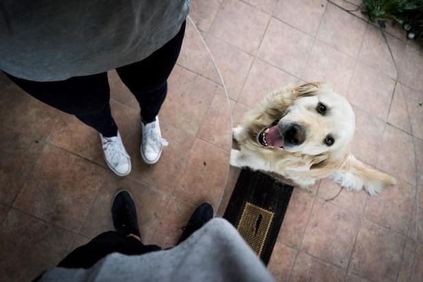 cute happy dog looking up