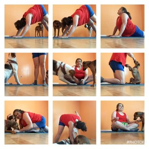 Dog and Person workout