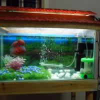 small fish tank india - freshwater fish | image gallery