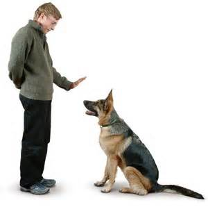 Are You Confused About Dog Training