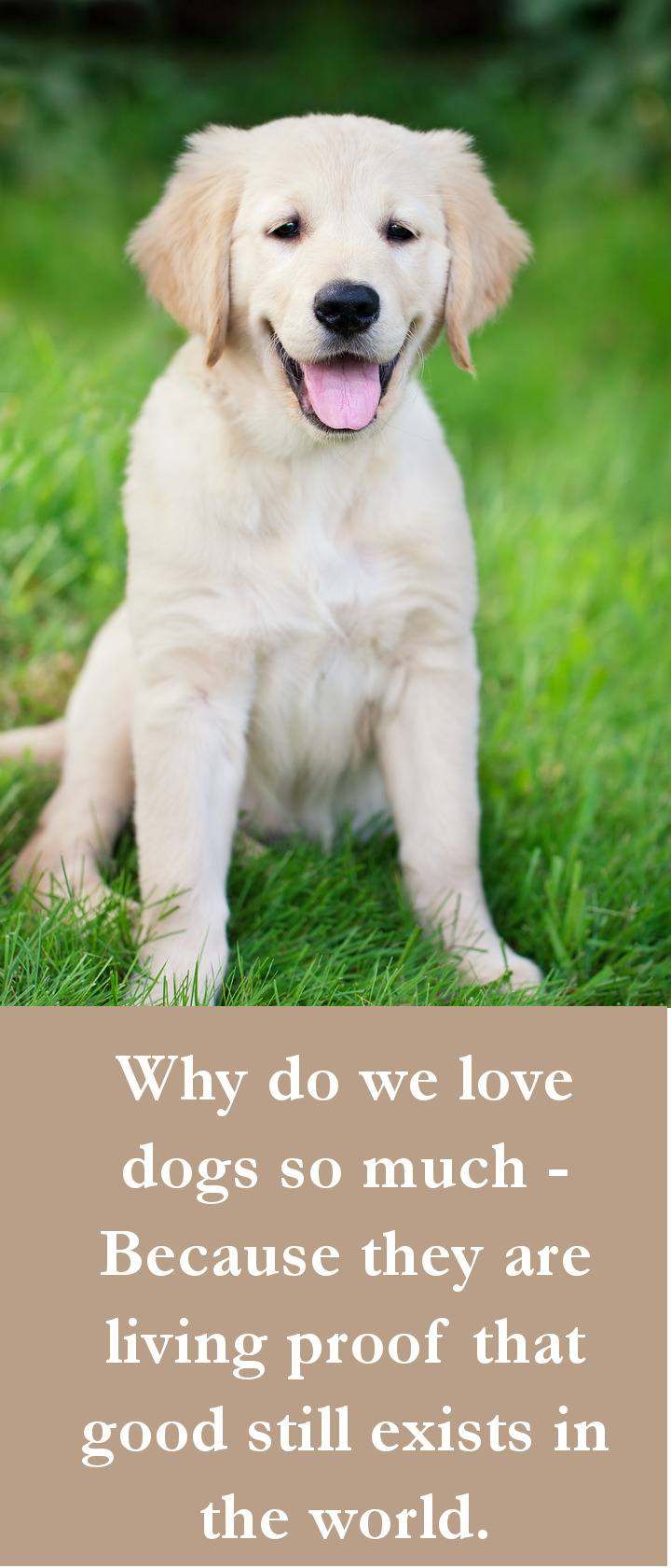 Large Of Funny Dog Quotes