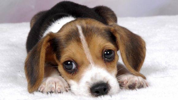 Training Your Puppy Training Your Puppy! Start with the Basics Training Your Puppy! Start with the Basics Puppy1