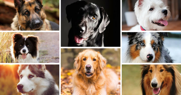 Picking a Dog Breed!