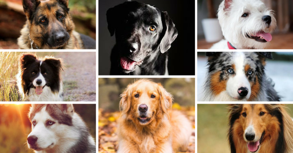 Picking a Dog Breed Picking a Dog Breed! Picking a Dog Breed! breeds