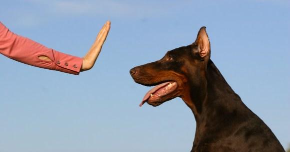 Dogs Training Tips Dogs Training Tips Dogs Training Tips dog training