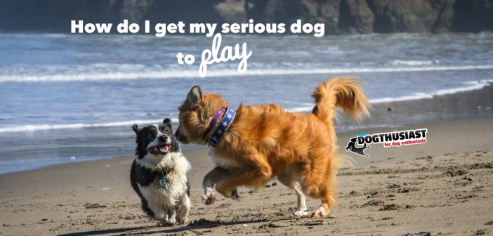 Two playful dogs at the beach
