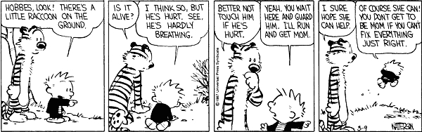 calvin and hobbes raccoon quote