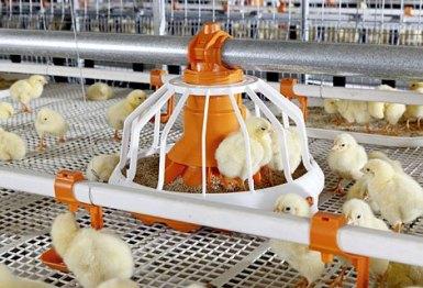 big-duchman-broilerkaefig-broiler-cage-avimax-transit_id_01 (1)