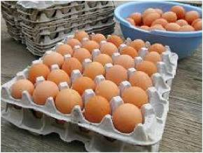 Egg Tray paper