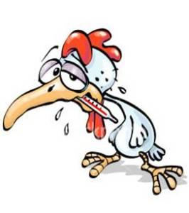 ayam sakit dokter unggas