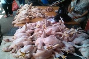 harga ayam mahal tinggi langka