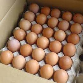 panen-telur