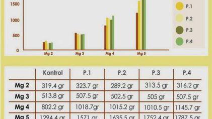 diagram pertumbuhan ayam broiler