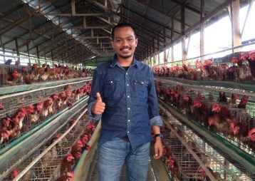 kisah sukses peternak ayam petelur hebat