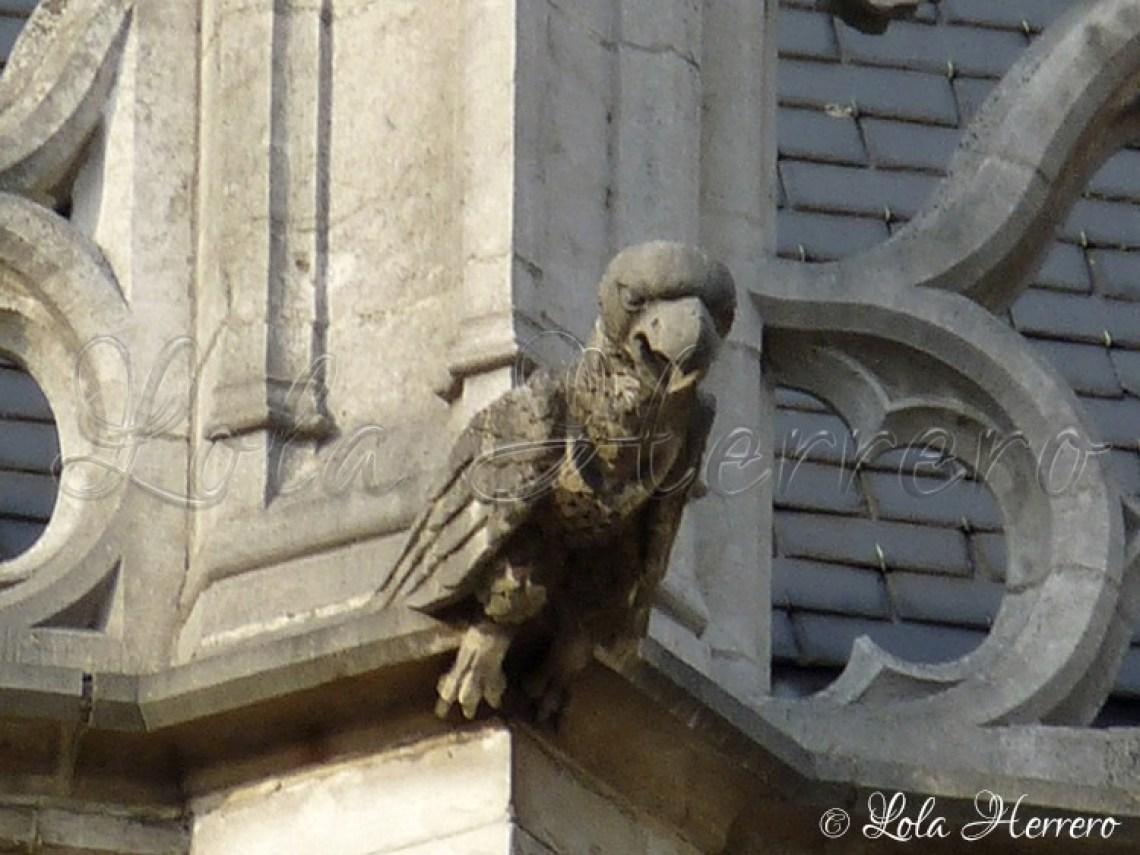 Gárgola Catedral Bruselas (Bélgica) (310)