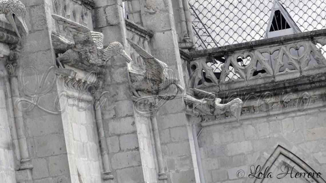 Gárgolas Quito (Ecuador) (261)