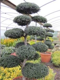 buy plants online ireland (3)