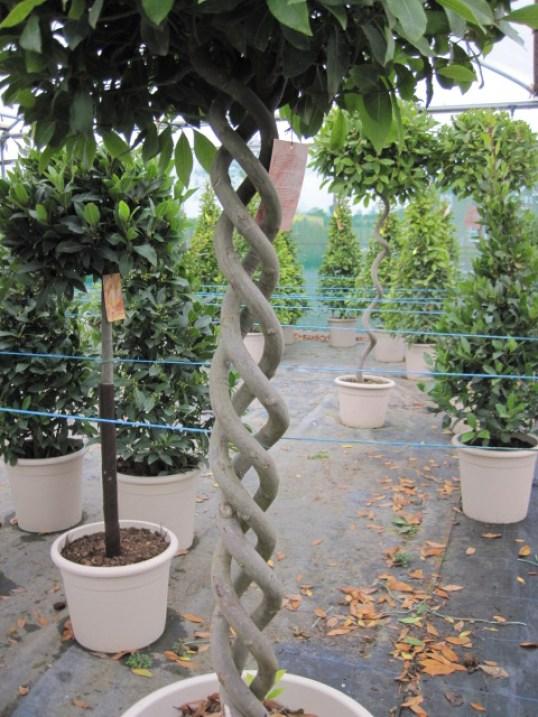 buy plants online ireland (4)