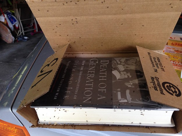 breda-books2